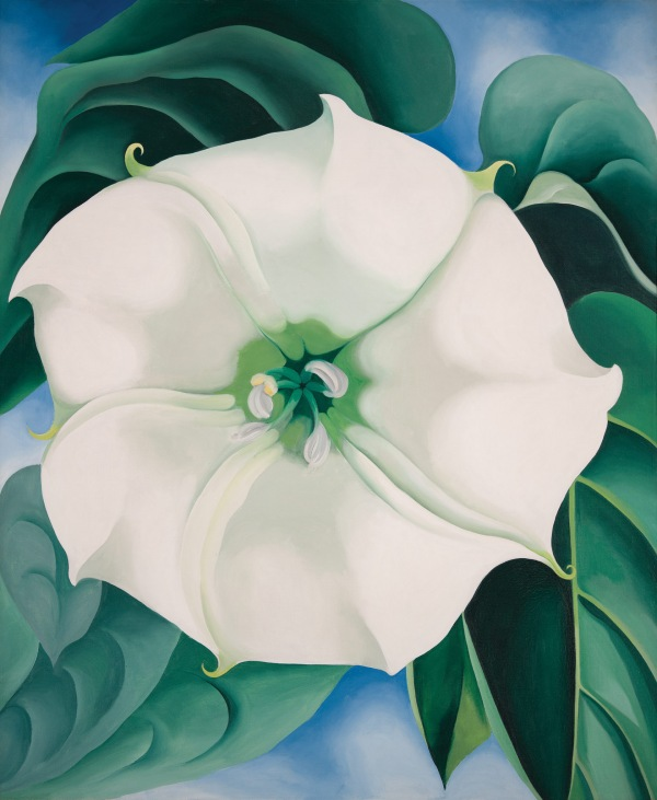 Georgia O'Keeffe_Georgia O'Keeffe_Jimson Weed:White Flower No. 1_1932