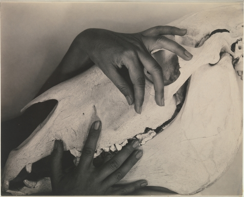 Manos de Georgia O'Keeffe sobre la calavera de un caballo_Alfred Stieglitz
