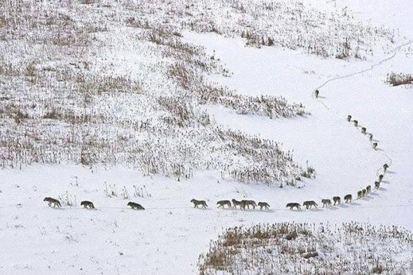 Código lobo_foto Cesare Brai