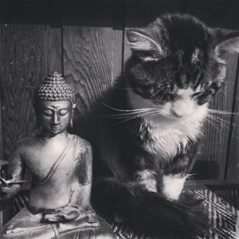 Gato&Buddha