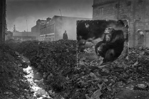 Nick-Brandt_Inherit the dust_devastated-animal-habitats-inherit-the-dust-east-africa-nick-brandt-27