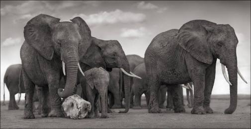 nick-brandt_elephant-skull_amboseli_2010