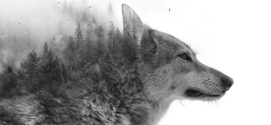 loup-des-bois-illusion-magnifique-photo-wolf