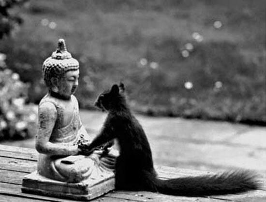 buddha-ecureuil