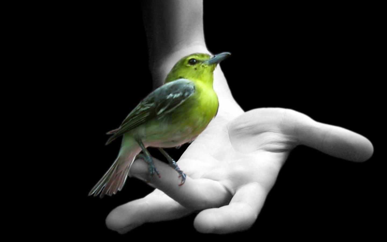 greenbird-arm-wallpaper